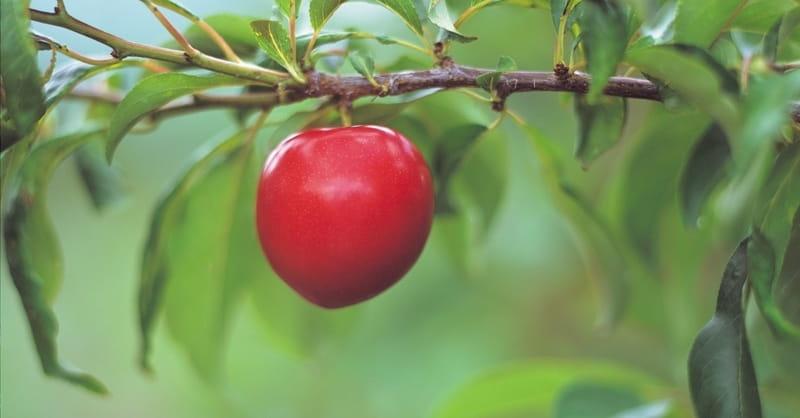 Bearing Fruit? Works Salvation? Or Do Nothing?